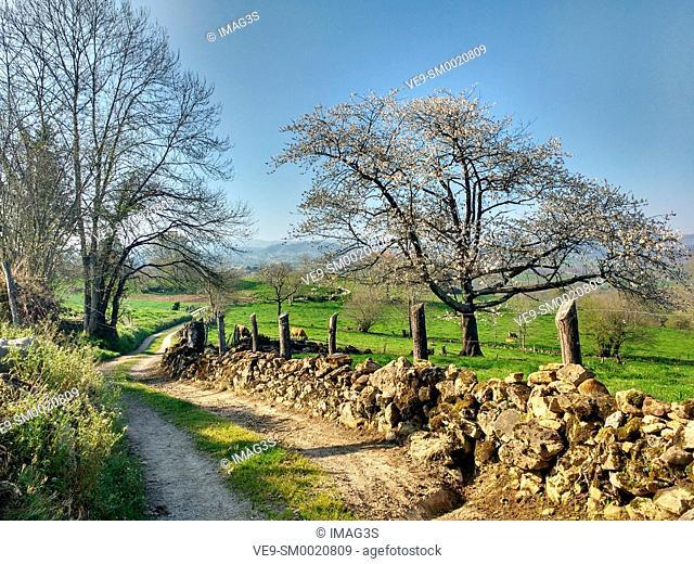 Rural landscape in Nava, Asturias, Spain