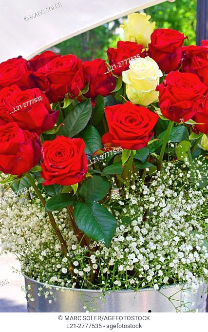Red roses, white rose