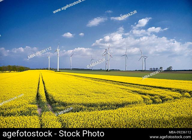 Agriculture, agriculture, blooming rape field, blue sky, wind farm
