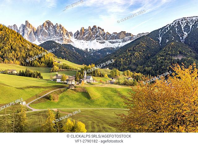 Autumnal cherry tree with Santa Maddalena village and Odle Dolomites peaks on the background. Santa Maddalena, Funes, Bolzano, Trentino Alto Adige - Sudtirol