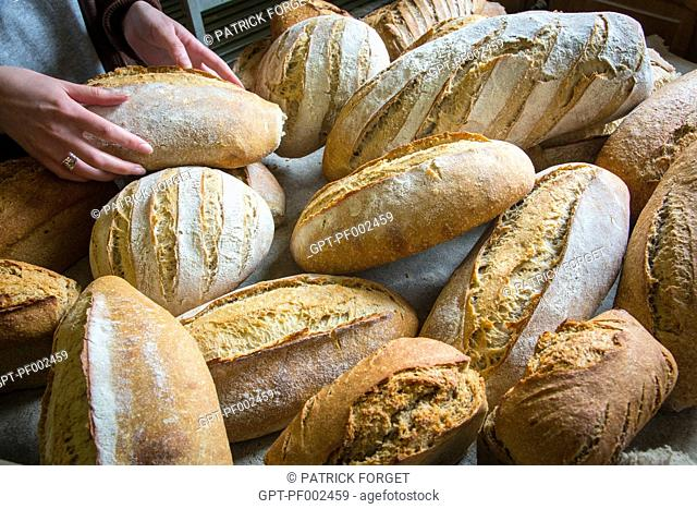 ORGANIC BREADS BAKED IN A WOOD-BURNING OVEN, BAKERY AT THE SAINT-MAMERT FARM, BUIS-SOUS-DANVILLE, EURE (27), FRANCE