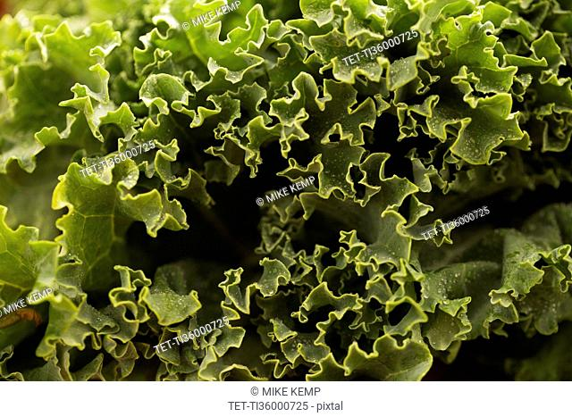 Close-up of kale leaves