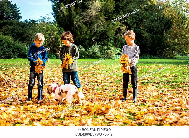 Three boys playing outdoors with pet dog, gathering autumn leaves