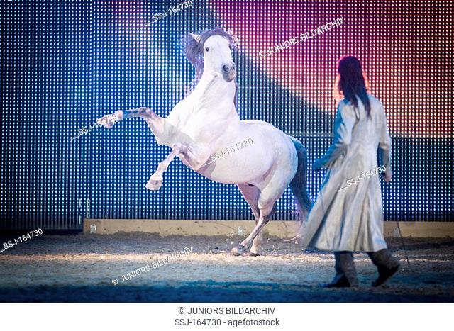 Equitana : man and Lusitano horse