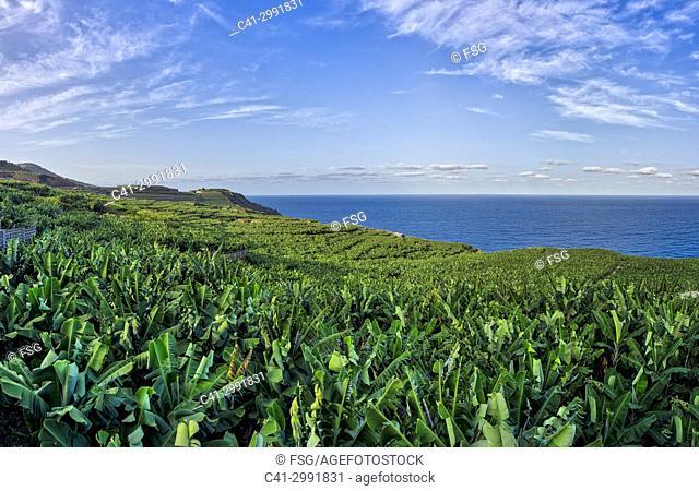 Punta Llana. Island of La Palma. Canary Islands. Spain