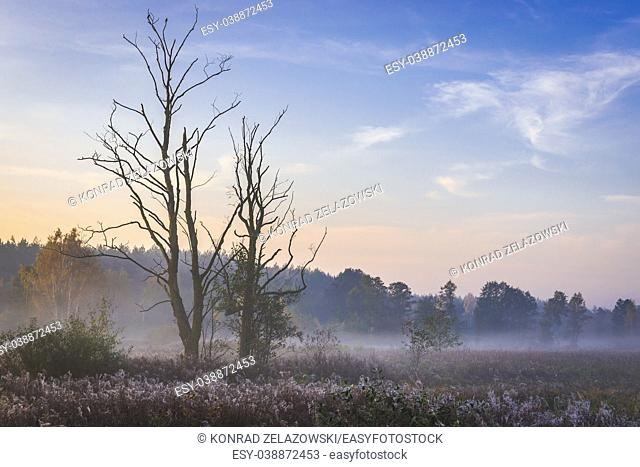 Morning view of a meadow in Gorki village, Sochaczew County on the edge of Kampinos Forest, large forests complex in Masovian Voivodeship of Poland