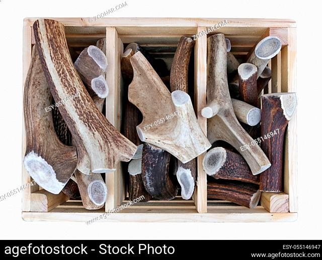 Sawn pieces of antlers of forest deer and elks in wooden box sold on the street. Isolated with patch