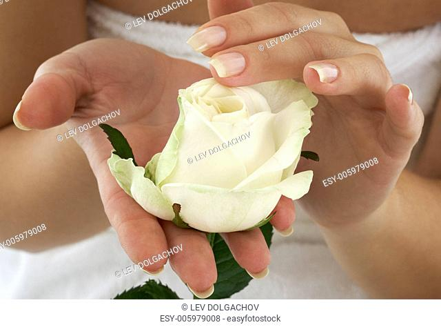 beautiful woman hands with rosebud