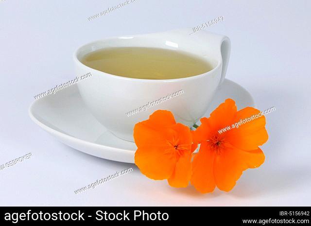Cup of Gold Poppy Tea, Dormouse, California Cap Poppy (Eschscholzia californica), Gold Poppy