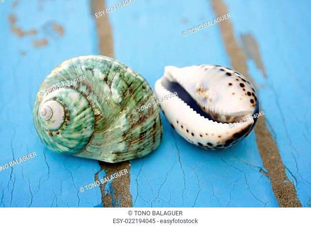 blue wooden beach floor green sea shell