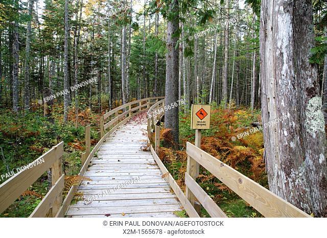 Pondicherry Wildlife Refuge - Mud Pond Trail in Jefferson, New Hampshire USA during the autumn months