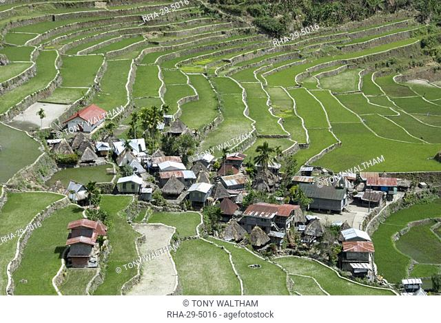 Stone-walled rice terraces of Ifugao culture at Batad village, part of Banaue area, UNESCO World Heritage Site, Cordillera, Luzon, Philippines, Southeast Asia