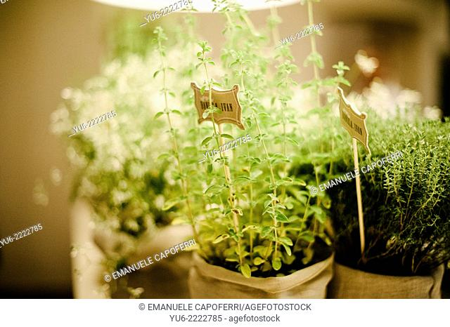 Pots with herbs, gift for wedding guests