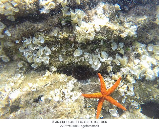 Starfish and Turquoise water in Minorca, Balearics Islands, Spain. Underwater image