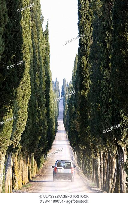 europe, italy, tuscany, chianti, white road with cypresses