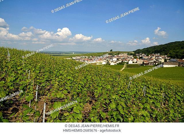 France, Marne, Verzenay, mountain of Reims, vineyard of Grand Cru classified Champagne