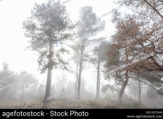 Foggy Forest in the Natural Park of Montserrat mountain, Barcelona, Spain