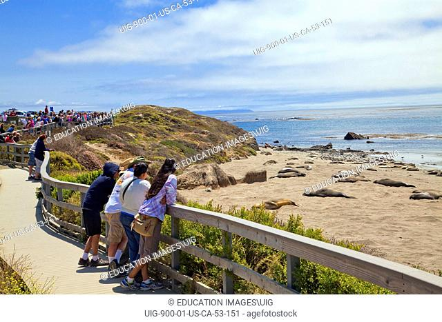 Tourists watching Elephant Seals, Piedras Blancas, San Simeon, San Luis Obispo County, California