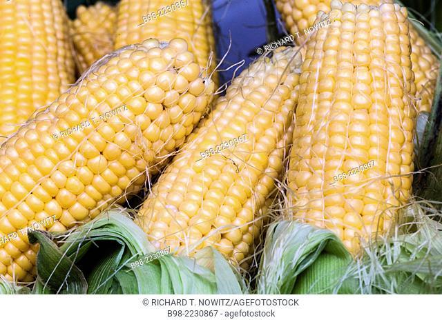 Fresh ears of corn in the Tel Aviv's Carmel Market
