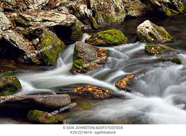 Fallen leaves in the Little River, Great Smoky Mountains NP, Tennessee, USA