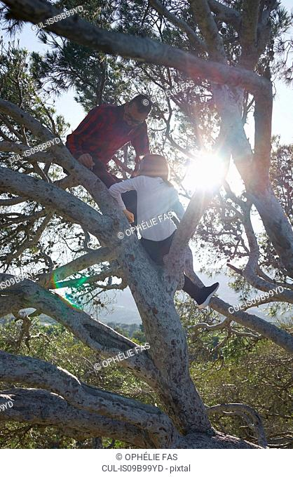Young man and girl sitting in sunlit tree, Vejer de la Frontera, Andalucia, Spain