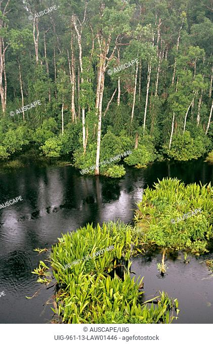 Peat swamp forest beside the blackwater Sekonyer River during monsoon floods, Tanjung Puting National Park, central Kalimantan, Borneo, Indonesia