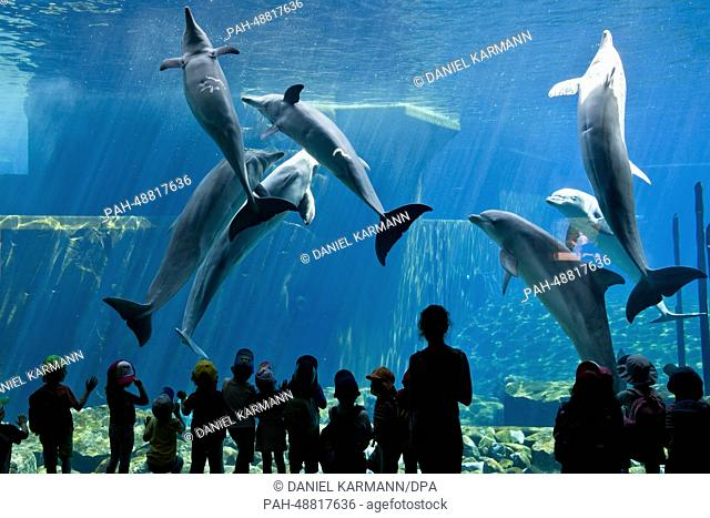 Children look at dolphins at the Doplhinarium at the zoo in Nuremberg, Germany, 22 May 2014. Photo: Daniel Karmann/dpa | usage worldwide