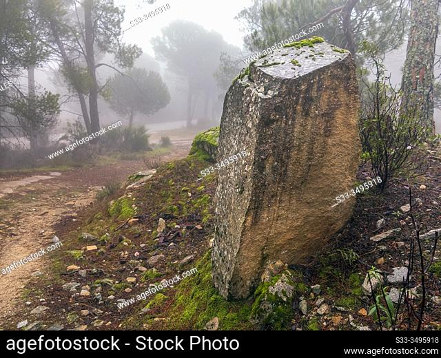 Granite rock, pathway, moss, cistus and fog at Concejo pinewood in Cadalso de los Vidrios. Madrid. Spain. Europe