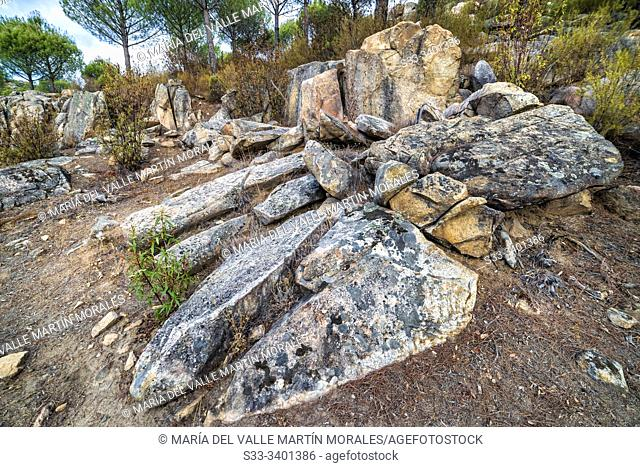 Granite rocks pines and cistus at Alcornocoso hill early in the morning. Almorox. Toledo. Spain. Europe
