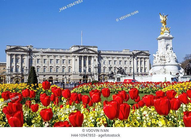 England, London, Buckingham Palace and Tulips
