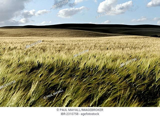 Tuscan landscape near Montecatini, Province of Pisa, Tuscany, Italy, Europe