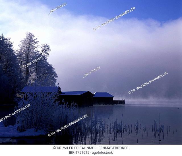 Morning fog on Lake Kochelsee, Upper Bavaria, Germany, Europe
