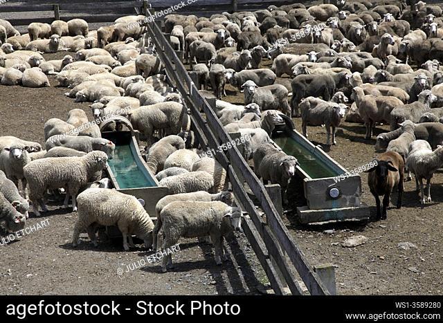 Sheep farm in New South Wales, Australia