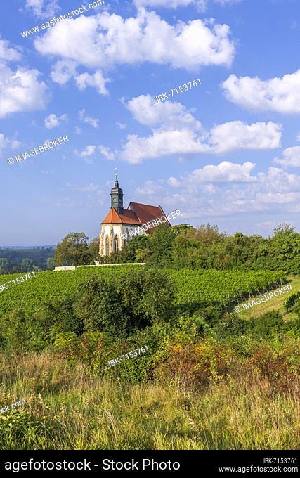 Pilgrimage church Maria im Weingarten, Volkach, Mainfranken, Lower Franconia, Franconia, Bavaria, Germany, Europe