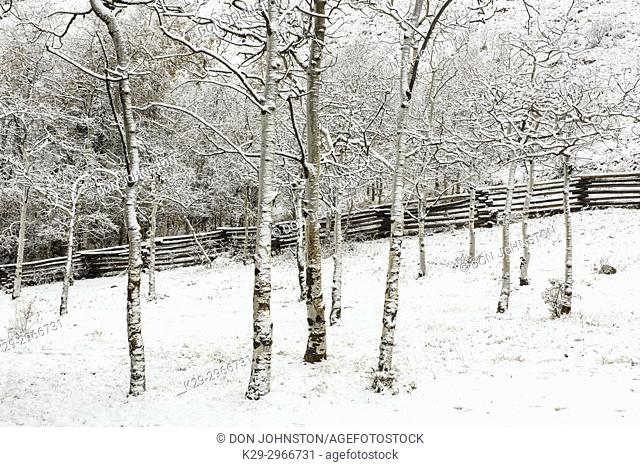Early snow on the grounds of Tsylos Lodge, Chilcotin Wilderness, British Columbia, Canada