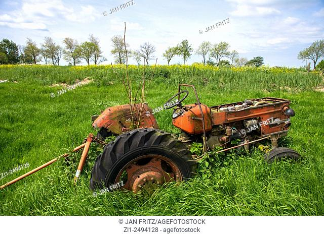 Old red tractor in meadow in holland