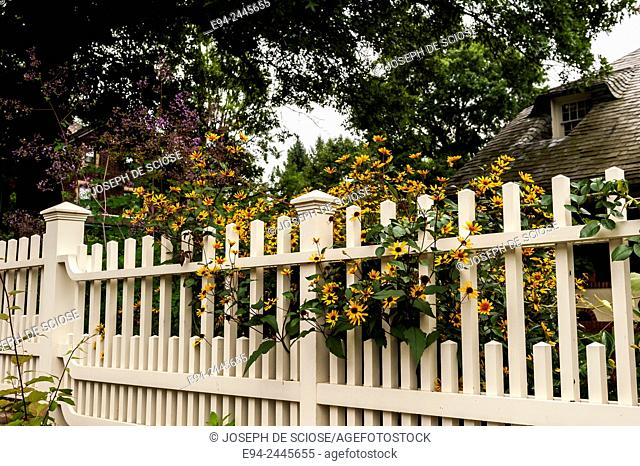 White picket fence with black eyed susans, Pittsburgh. Pittsburgh Pennsylvania USA