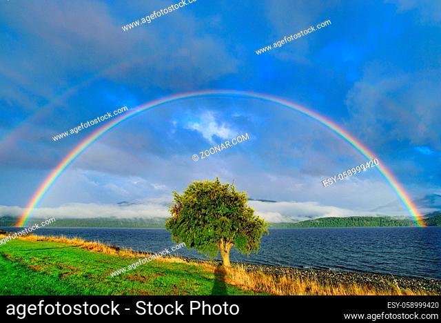 Double rainbow above a tree, Te Anau, New Zealand