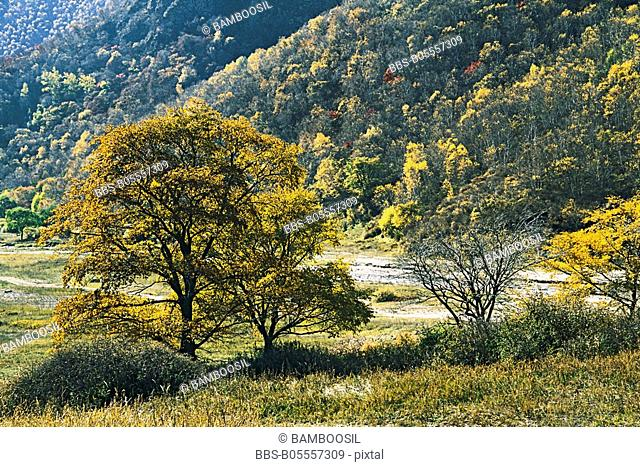 Laozhang Valley, Guyuan County, Hebei Province of People's Republic of China