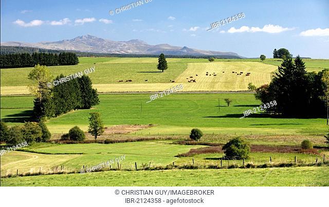 Agricultural landscape, Monts Dore, Parc Naturel Regional des Volcans d'Auvergne, Auvergne Volcanoes Regional Nature Park, Puy de Dome, France, Europe