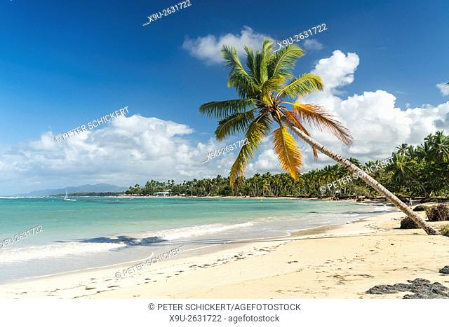 palm fringed sandy beach of El Portillo, Las Terrenas, Samana, Dominican Republic, Carribean, America,