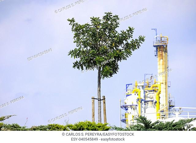 Reforestation in the surroundings of a petrochemical complex in Tarragona in Catalonia, Spain, Europe