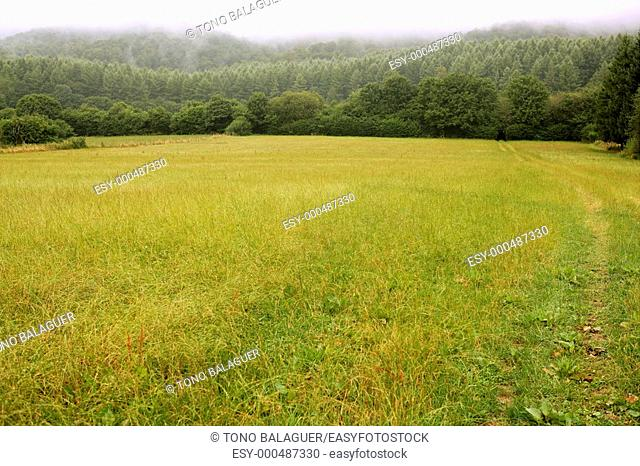 Cloudy day in the forest meadow green Pyrenees landscape