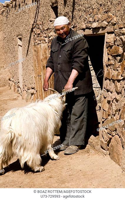 A Kazakh man and his sheep