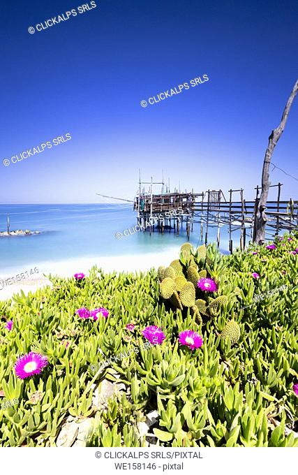 Coast of Abruzzo , San Vito Chietino village, I foregroung typical flowers , in background anciente fishing machinery, Chieti district, Abruzzo, Italy