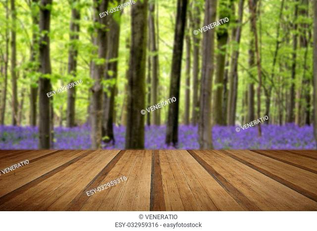 Beautiful carpet of bluebell flowers in Spring forest landscape with wooden planks floor