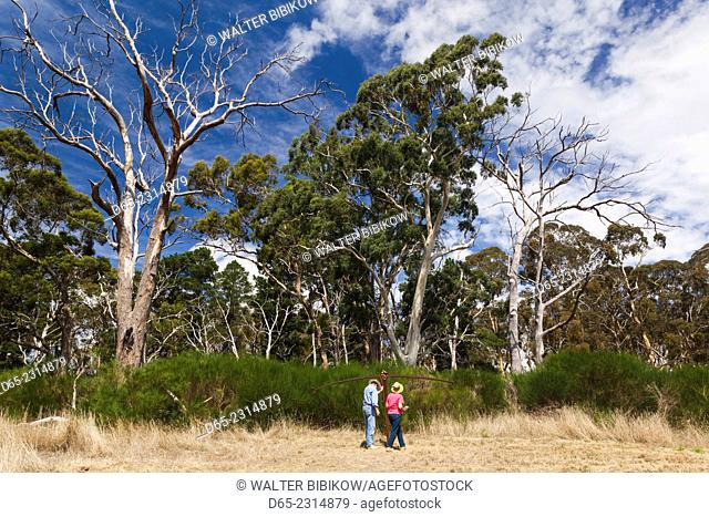 Australia, South Australia, Adelaide Hills, Hahndorf, The Cedars, fields and sculpture garden