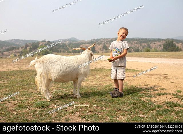 Boy laughing as he feeds his pet goat