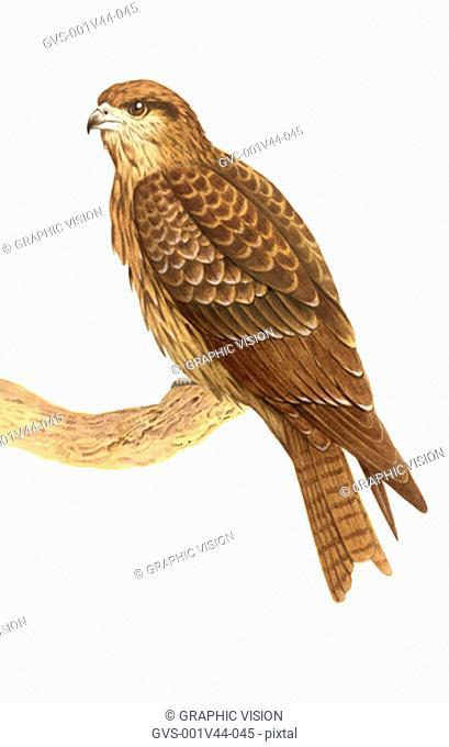 Illustration of a Kite