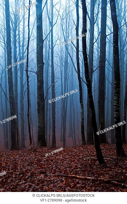A woodland in the italian apennines in autumn. Aveto valley, Genoa, Italy, Europe